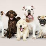 Como adestrar cachorro filhote?
